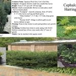 oakhurst landscaping plants
