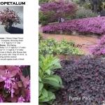 oakhurst landscaping