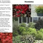 decatur landscaping