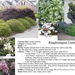 oakhurst atlanta landscaping plants and garden design