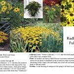 atlanta landscaping plants and garden design