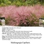 decatur landscaping plants and garden design