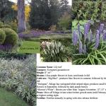 atlanta garden design