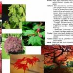 decatur landscaping plants