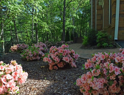 Best time to install shrubs and trees